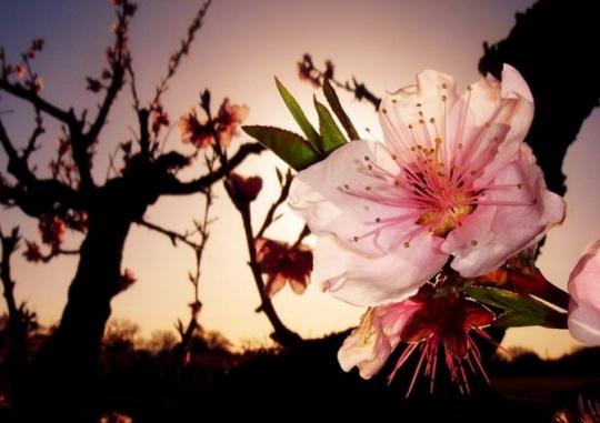 寻找春天的颜色