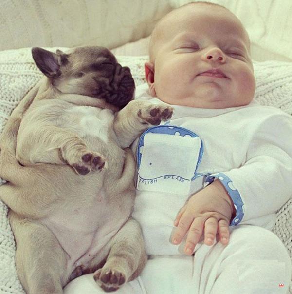 网络超红:宝宝与狗宝宝的合照