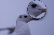 最新影楼资讯新闻-5个秘诀 告诉你如何得到足够清晰的照片
