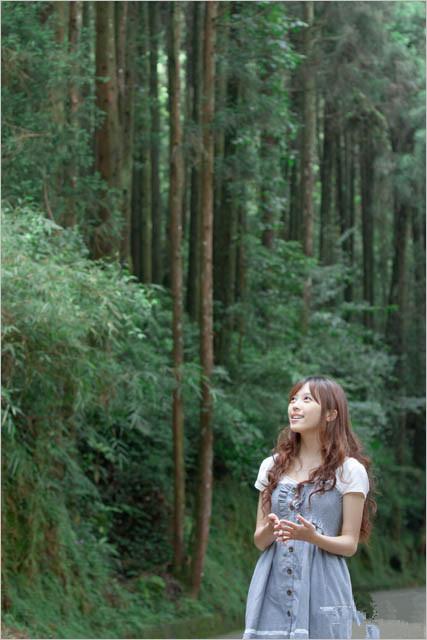 森林系手机背景图