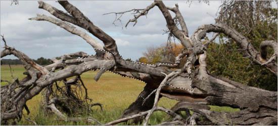 创意手工树枝动物艺术