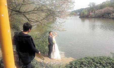湖南省森林植物园取景权被买断