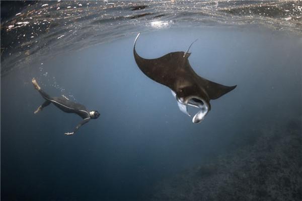 高清动物水下照片