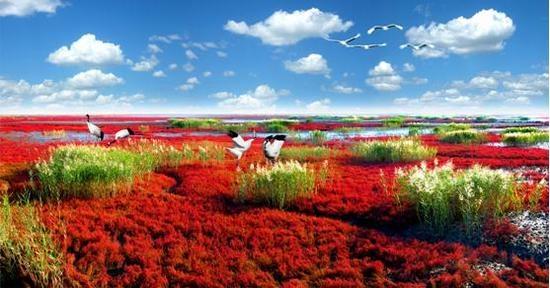 """2017.5.20日截稿""""世界红色海岸线""""盘锦红海滩摄影大展"""