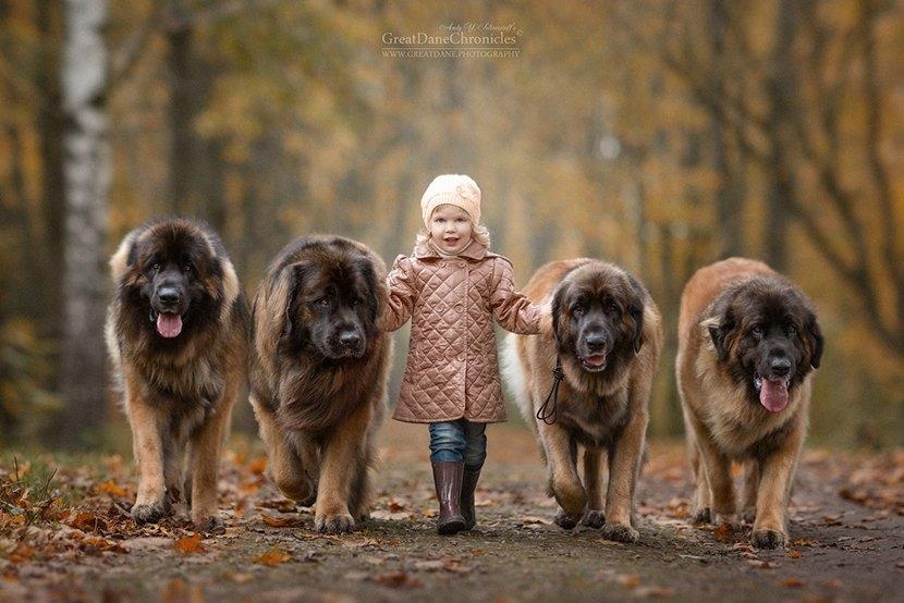 俄罗斯摄影师拍摄大狗与小孩 展现别样的温馨