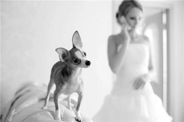 """如何拍好这些在婚礼上""""抢风头""""的萌宠"""