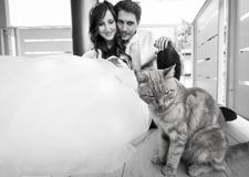清新动人的生活情调 带着猫咪结婚去