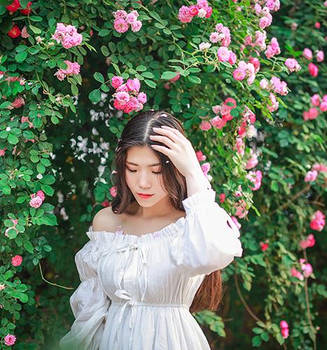 蔷薇花 写真摄影