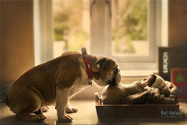 治愈系摄影 婴儿与宠物的紧密守护