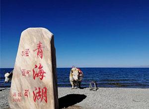 最新影樓資訊新聞-青海湖管理局,叫停保護區婚紗攝影!