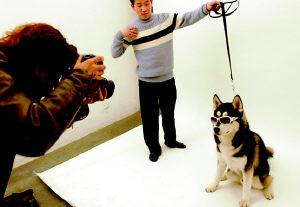 最新影楼资讯新闻-为宠物拍写真成新兴职业 亚博娱乐唯一官网师:要喜欢宠物