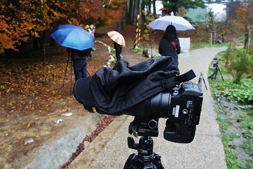 摄影教程:教你如何利用雨天拍枫叶
