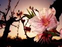 最新影楼乐虎娱乐平台新闻-寻找春天的颜色