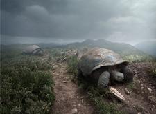 最新影楼资讯新闻-波兰的设计师超现实艺术作品:谢谢你大自然,给我一个住的地方