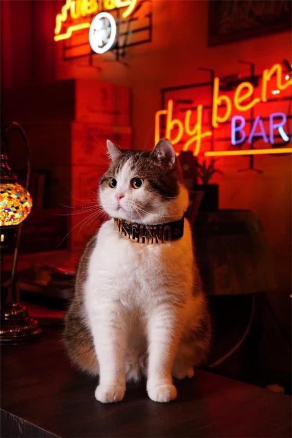 猫咪变身影楼公关,就做2件事,捣乱和卖萌