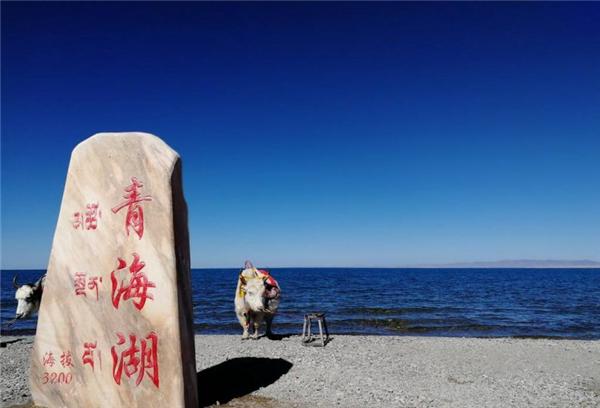 青海湖管理局,叫停保護區婚紗攝影!