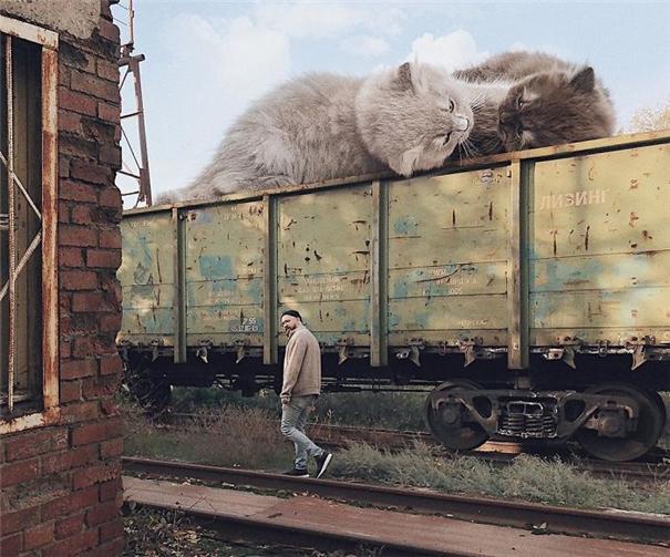这么大的猫你撸的动吗 闯入日常的巨大猫咪