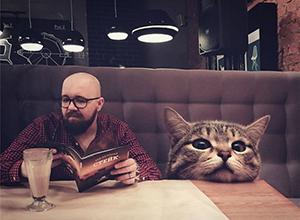 這么大的貓你擼的動嗎 闖入日常的巨大貓咪