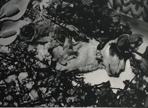 成都展訊 | 寫真黃金一代——日本攝影大師五人展