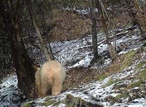 最新影樓資訊新聞-全球唯一白化大熊貓長大自立門戶|索尼推出FE 35mm F1.4GM鏡頭……