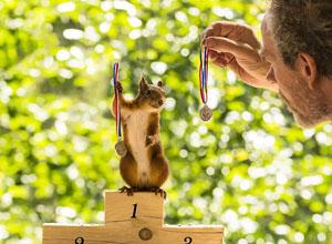 最新影楼资讯新闻-摄影新鲜事:瑞典摄影师以松鼠为主角拍摄奥运主题照